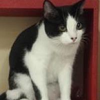 Adopt A Pet :: Lindburg - Mesa, AZ