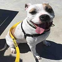 Adopt A Pet :: ROAMEO - Alameda, CA