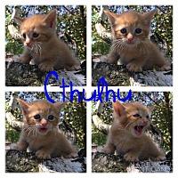 Adopt A Pet :: Cthulhu - Garden City, MI