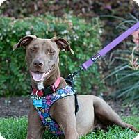 Adopt A Pet :: Fitz - Austin, TX