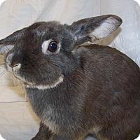 Adopt A Pet :: Grace - Alexandria, VA