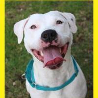 Adopt A Pet :: Nina - Dodgeville, WI