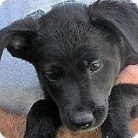Adopt A Pet :: Mizar - Germantown, MD