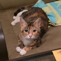 Adopt A Pet :: Betty - Ashtabula, OH