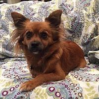 Adopt A Pet :: Dora - San Francisco, CA