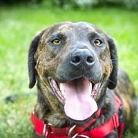 Adopt A Pet :: Lainey (Elena) - Boulder, CO