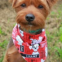 Adopt A Pet :: MORK - Clayton, NJ