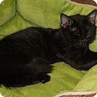 Adopt A Pet :: Guiness - Mobile, AL