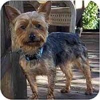 Adopt A Pet :: Elvis - Columbus, OH