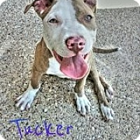 Adopt A Pet :: Tucker - Geismar, LA