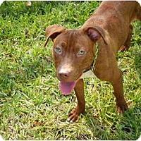 Adopt A Pet :: Baylee - Orlando, FL