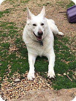 German Shepherd Dog Mix Dog for adoption in Philadelphia, Pennsylvania - Thaiger