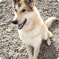 Adopt A Pet :: Jacob - Ashland, OR