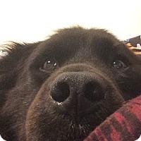 Adopt A Pet :: Josh (courtesy listing) - Richmond, VA