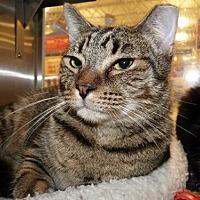 Adopt A Pet :: T.S. Elliott - Capshaw, AL