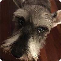 Adopt A Pet :: Margarita - Los Angeles, CA
