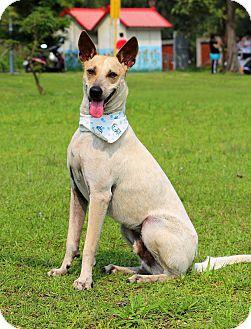 Labrador Retriever/Hound (Unknown Type) Mix Dog for adoption in San Mateo, California - Luke