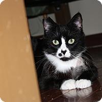 Adopt A Pet :: Ori - Armuchee, GA