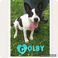 Adopt A Pet :: Colby - Haggerstown, MD