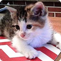 Adopt A Pet :: Tootles - Lebanon, PA