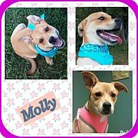 Labrador Retriever/Catahoula Leopard Dog Mix Puppy for adoption in Malvern, Arkansas - MOLLY
