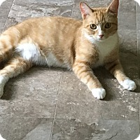 Adopt A Pet :: Leanne - Tarboro, NC