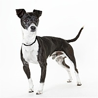 Adopt A Pet :: Skippy - Monterey, CA