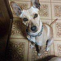 Adopt A Pet :: Sebastian - Berwick, PA