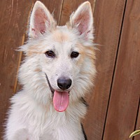 Adopt A Pet :: Vindaloo - 37 pounds - Los Angeles, CA