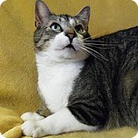 Adopt A Pet :: Arthur - Spencer, NY