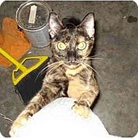 Adopt A Pet :: June Bug - Tomball, TX