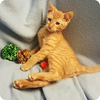 Adopt A Pet :: Stanley - Bentonville, AR