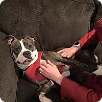 Adopt A Pet :: MOLLY - Grafton, OH