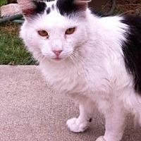 Adopt A Pet :: Saphyra - Cerritos, CA