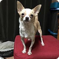 Adopt A Pet :: Aria - Davie, FL