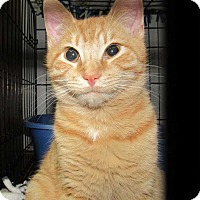 Adopt A Pet :: Oliver - Norwich, NY