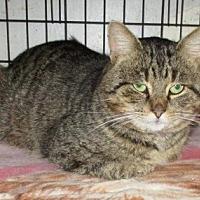 Adopt A Pet :: SUCH-A-JOY - detroit, MI