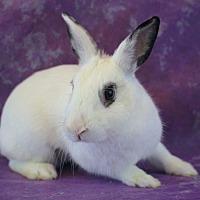 Adopt A Pet :: Jasmine - Wilmington, NC