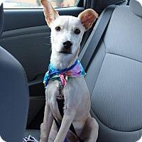 Adopt A Pet :: Congo - West Warwick, RI