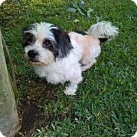 Adopt A Pet :: Dexter - Santa Fe, TX