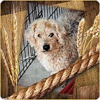 Adopt A Pet :: Wally - Crowley, LA