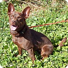 Adopt A Pet :: Izzy (17 lb) New Pics & Video