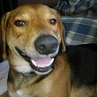 Adopt A Pet :: Clete - cicero, NY