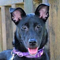 Adopt A Pet :: Lydia - San Francisco, CA