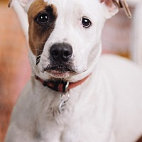 Adopt A Pet :: Margo - Portland, OR