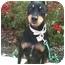 Photo 1 - Miniature Pinscher Dog for adoption in El Cajon, California - CODY