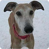 Adopt A Pet :: Missy - Chagrin Falls, OH