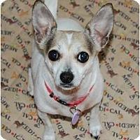 Adopt A Pet :: Lily - Rigaud, QC