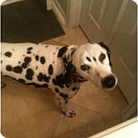 Adopt A Pet :: Mickey - League City, TX
