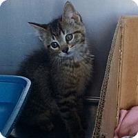 Adopt A Pet :: Lex - Byron Center, MI